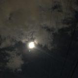明日は中秋の名月です